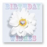 Birthday Wishes: CDY004