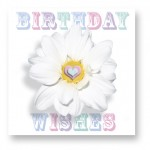Birthday Wishes: WHT004